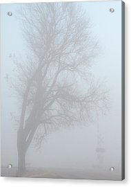 Hangman's Tree Acrylic Print