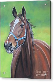 Hanover Shoe Farm Horse Acrylic Print by Charlotte Yealey