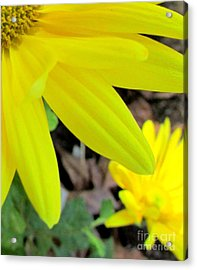 Happenstance #3 Lower Right Acrylic Print by Nancy Rucker