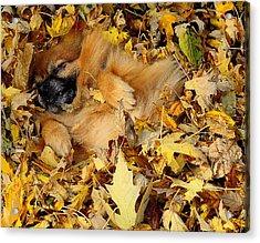 Happiness Is A Fresh Pile Of Leaves Acrylic Print by Joe Wicks