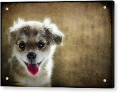 Happiness Is A Little Puppy Acrylic Print by Lisa Knechtel