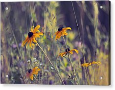 Happiness Is In The Meadows - L03 Acrylic Print by Variance Collections
