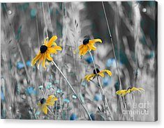 Happiness Is In The Meadows - Sc02a Acrylic Print by Variance Collections
