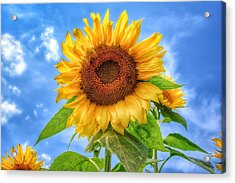 Happiness Is...... Acrylic Print