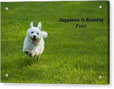 Happiness Is Running Free Acrylic Print