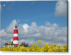 Happisburgh Lighthouse With Oil Seed Rape In Flower Acrylic Print by Paul Lilley