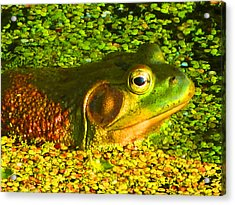 Happy As A Frog In A Pond Acrylic Print