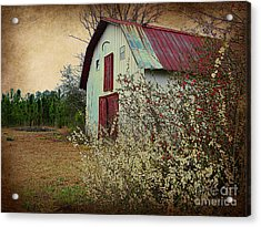 Happy Barn In Spring Acrylic Print by Lorraine Heath