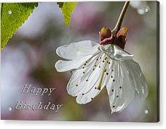 Happy Birthday Blossom Acrylic Print