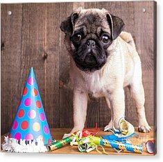 Happy Birthday Cute Pug Puppy Acrylic Print by Edward Fielding