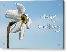 Happy Birthday Daffodil Acrylic Print