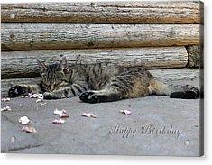 Happy Birthday Sleeping Cat Acrylic Print