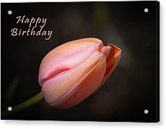 Happy Birthday Tulip Acrylic Print