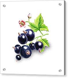 Happy Blackcurrant  Acrylic Print by Irina Sztukowski
