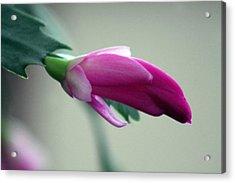 Happy Cactus Acrylic Print