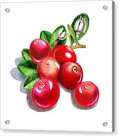 Happy Cranberry Bunch Acrylic Print