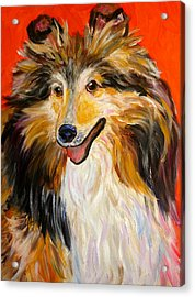 Happy Dog  --  Sheltie Acrylic Print