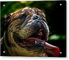 Acrylic Print featuring the photograph Happy Dog by Bob Orsillo