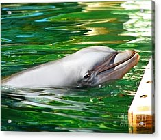Acrylic Print featuring the photograph Happy Dolphin by Kristine Merc