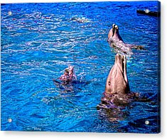 Happy Dolphins Acrylic Print by Sandra Pena de Ortiz
