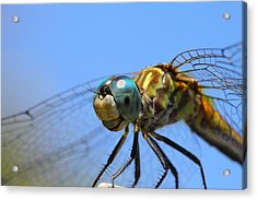 Happy Dragonfly Acrylic Print