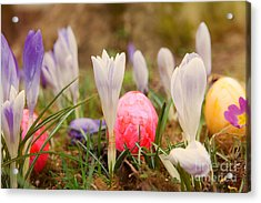 Acrylic Print featuring the photograph Happy Easter 2 by Christine Sponchia