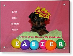 Happy Easter Acrylic Print by Lorna Rogers Photography