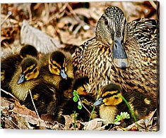 Happy Family Acrylic Print by Frozen in Time Fine Art Photography