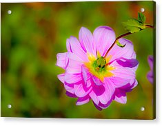 Happy Flower Acrylic Print by Karol Livote