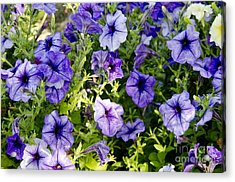 Acrylic Print featuring the photograph Happy Flowers by Wilma  Birdwell