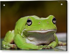 Happy Frog 0003 Acrylic Print by Kevin Chippindall
