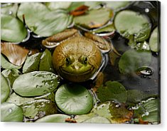 Happy Frog Acrylic Print