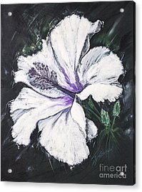 Happy Hibiscus Acrylic Print by Scott and Dixie Wiley