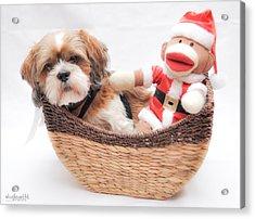 Happy Holidays Acrylic Print by Sarai Rachel