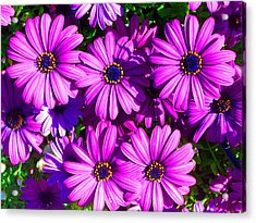 Happy Acrylic Print