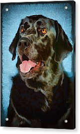 Happy Lab Acrylic Print by Angel Pachkowski