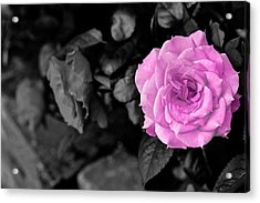 Happy Mother's Day Acrylic Print by Donald Chen