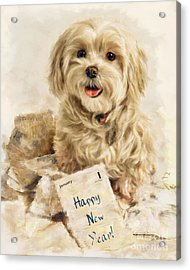 Maltese Happy New Year Acrylic Print
