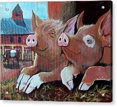 Happy Pigs Acrylic Print by Dona Davis