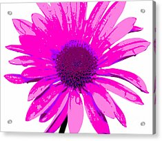 Happy Pink Acrylic Print by Krissy Katsimbras