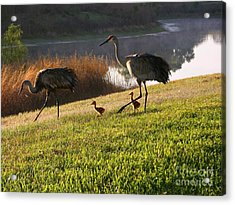 Happy Sandhill Crane Family - Original Acrylic Print by Carol Groenen