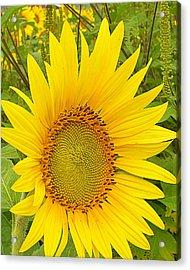 Happy Sunflower Acrylic Print