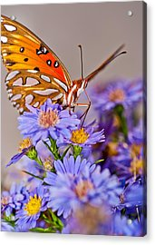 Happy To Be Here Acrylic Print