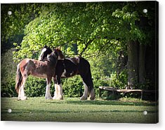 Happy Together Acrylic Print by Stephen Norris