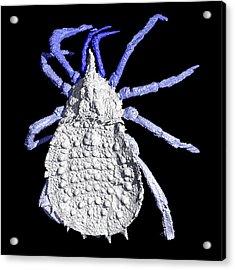 Haptopod Arachnid Acrylic Print
