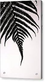 Hapu'u Frond Leaf Silhouette Acrylic Print by Lehua Pekelo-Stearns