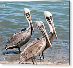 Acrylic Print featuring the photograph Harbor Masters by Dick Botkin