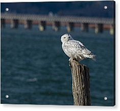 Harbor Sentry Acrylic Print