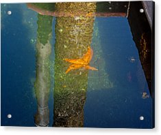 Harbor Star Fish Acrylic Print