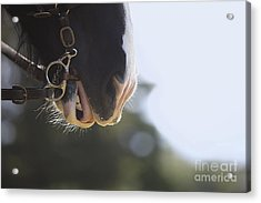 Hard Work Plowing Acrylic Print by Rich Collins